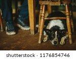 dog in pub | Shutterstock . vector #1176854746