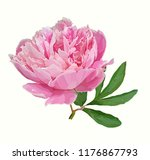 a picturesque peony flower.... | Shutterstock .eps vector #1176867793