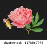 a picturesque peony flower.... | Shutterstock .eps vector #1176867796