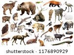 collection of different birds ... | Shutterstock . vector #1176890929