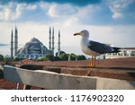 Seagull Over Blue Mosque Or...