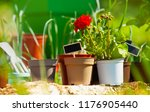flowerpots with blanked text... | Shutterstock . vector #1176905440