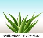 realistic aloe vera medicinal... | Shutterstock .eps vector #1176916039