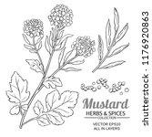 mustard plant vector | Shutterstock .eps vector #1176920863