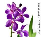 purple orchid flowers ....   Shutterstock . vector #1176925870