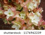 beautiful close up colourful... | Shutterstock . vector #1176962239
