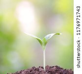 young green plant growing | Shutterstock . vector #1176971743