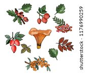 autumn objects for design... | Shutterstock .eps vector #1176990259