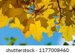autumn landscape of photography ... | Shutterstock . vector #1177008460