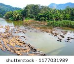 chalakudy river flowing to... | Shutterstock . vector #1177031989