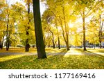 colorful city park scene in the ... | Shutterstock . vector #1177169416