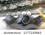 pearl ring in shell  | Shutterstock . vector #1177235863