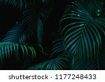 tropical palm leaves in the... | Shutterstock . vector #1177248433