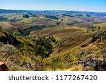 cerrado brazilian vegetation | Shutterstock . vector #1177267420