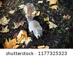 squirrel in park | Shutterstock . vector #1177325323