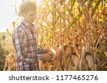 a young agronomist checks the... | Shutterstock . vector #1177465276