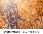 a young agronomist checks the... | Shutterstock . vector #1177465279