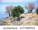 rhodes island. greece. 07 27... | Shutterstock . vector #1177489933