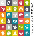 flat vector anatomy icons set.... | Shutterstock .eps vector #1177509466