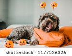sweet and friendly brown...   Shutterstock . vector #1177526326