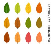 set of twelve autumn leaves in... | Shutterstock .eps vector #1177581139