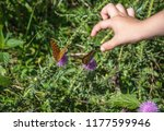 baby hand trying to catch a... | Shutterstock . vector #1177599946