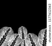 leaves of houseplant maranta... | Shutterstock . vector #1177612363