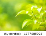leaf green nature abstract... | Shutterstock . vector #1177685026