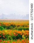 sea of flowers | Shutterstock . vector #1177702480