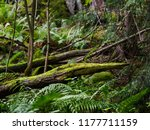 mossy tree trunks lying on a... | Shutterstock . vector #1177711159