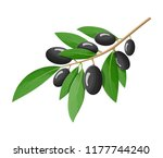 green olives branch isolated on ... | Shutterstock .eps vector #1177744240