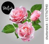 pink roses bouquet vector... | Shutterstock .eps vector #1177767940