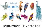 Colorful Tropic Birds Set...