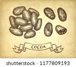 cocoa beans. ink sketch on old... | Shutterstock .eps vector #1177809193