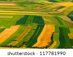 big field ready to harvest... | Shutterstock . vector #117781990