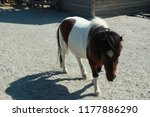 pony in the pen | Shutterstock . vector #1177886290