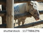 pony in the pen | Shutterstock . vector #1177886296