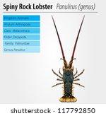 illustration of a panulirus...   Shutterstock .eps vector #117792850
