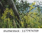 an old time skewed fence with...   Shutterstock . vector #1177974709
