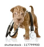 Stock photo shrpei puppy dog with a stethoscope on his neck isolated on white background 117799900