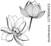 vector lotus flower. floral... | Shutterstock .eps vector #1178004013