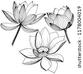 vector lotus flower. floral... | Shutterstock .eps vector #1178004019