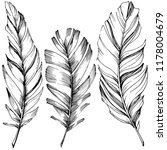 bird feather from wing... | Shutterstock . vector #1178004679