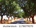 Landscape Of Quercus Suber  ...