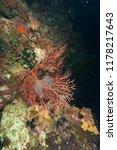 deep underwater world  | Shutterstock . vector #1178217643