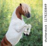 skewbald american miniature... | Shutterstock . vector #1178230849