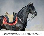 portrait closeup of black...   Shutterstock . vector #1178230933