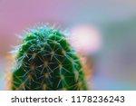 green cactus macro with spray... | Shutterstock . vector #1178236243