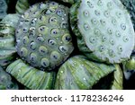 stack of fresh lotus seed pods... | Shutterstock . vector #1178236246