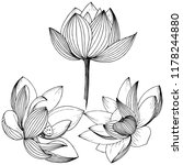 vector lotus flower. floral... | Shutterstock .eps vector #1178244880